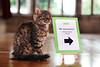 Asda - Christmas Advert Cat Casting