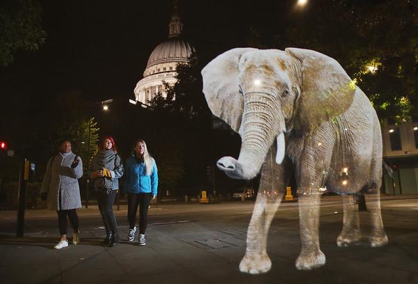 8/10/18 - World Wildlife Fund - 'Stop Wildlife Trafficking' campaign