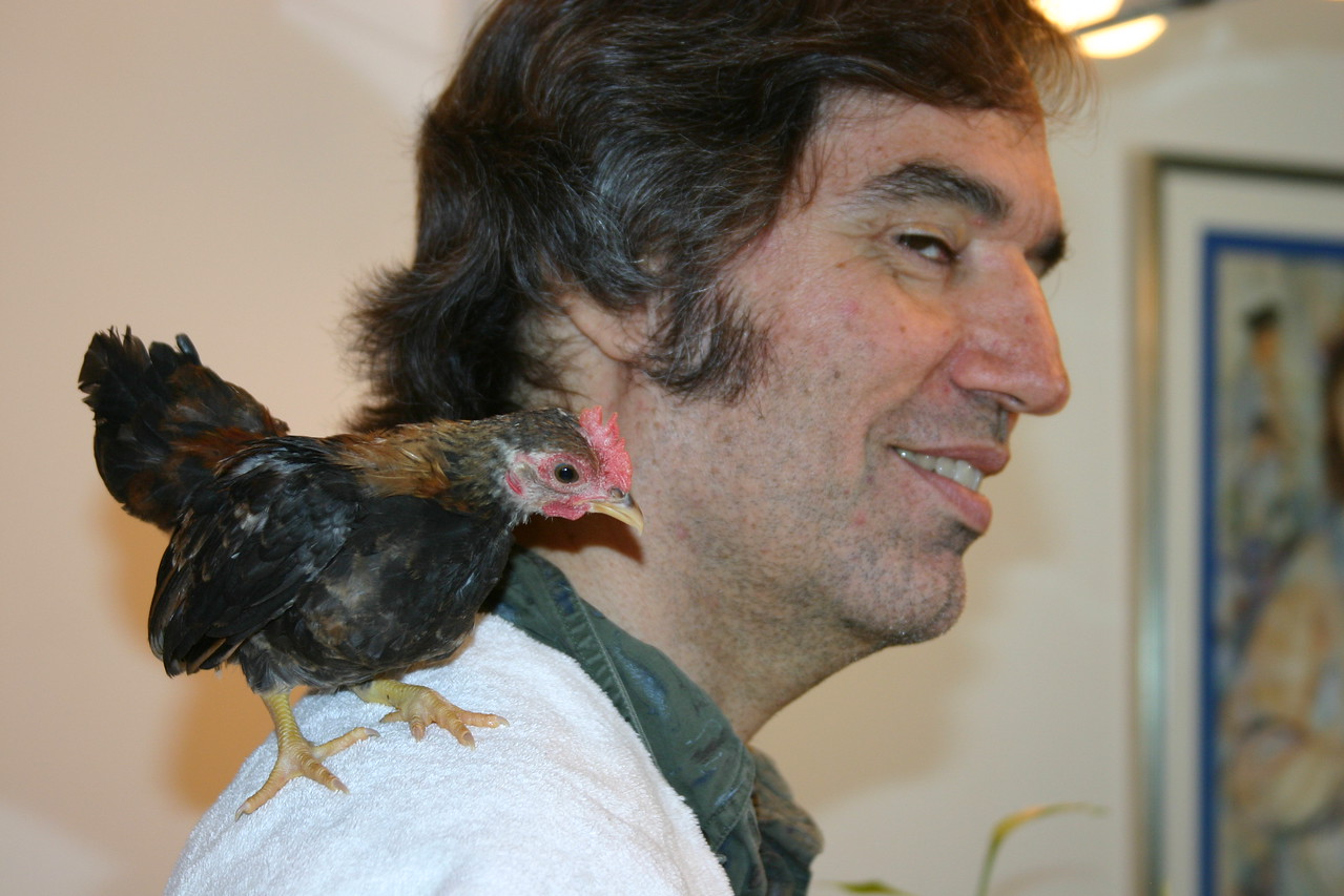 <font size = 3> <font color = turquoise>   ....A close up of Bama the Serama chicken on Doug's shoulder.