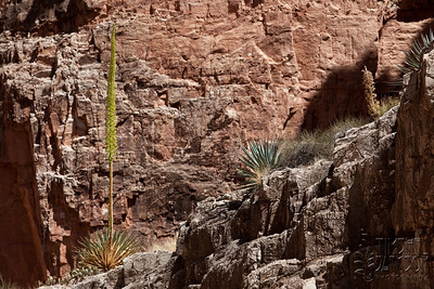 Yucca plants. I thought they were Aloe at first and got super excited. These are cool too.