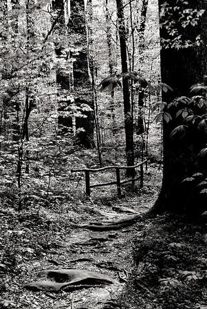 Trail and Rail