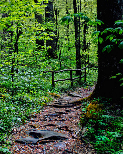 Joyce Kilmer Trail