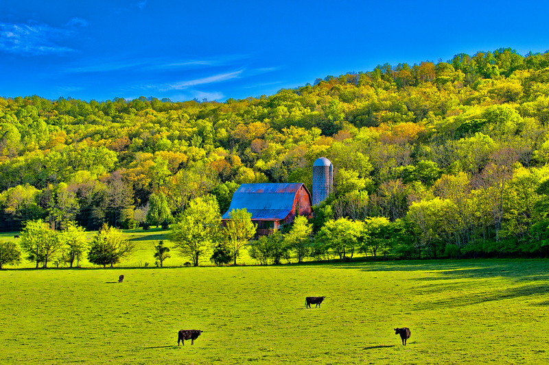 Barn and Silo in Cow Pasture