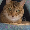 Animal Welfare League - Montgomery County located in Gaithersburg MD