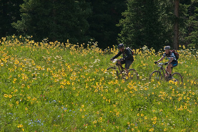 Elkton wildflowers