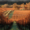 "<font face=""Papyrus"" color=""#5D92B1"" size=""5"">Winter at Olivina</font> (vertical) Livermore Wine Country <font face=""Trebuchet MS"" size ""3""><i>Image I.D. #:  V-05-003</i>    This image is available for purchase in the <font face=""papyrus"" color=""#5D92B1"" size=""3""><a href=""http://rogerravenstad.smugmug.com/gallery/1851170_wYH4t#92844440_fzYUo"">Fine Art Gallery</a></font>"