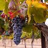 McGrail Vineyards