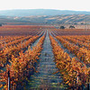 """<font face=""""Papyrus"""" color=""""#5D92B1"""" size=""""5"""">Vineyards at Tesla</font> Livermore Wine Country <font face=""""Trebuchet MS"""" size """"3""""><i></i>  This image is available for purchase in the <font face=""""papyrus"""" color=""""#5D92B1"""" size=""""3""""><a href=""""http://www.rogerravenstad.com/Fine-Art/Art-Prints-for-Framing/1851170_wYH4t#92844607_sPKNV"""">Fine Art Gallery</a></font>"""