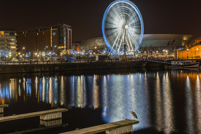 Salthouse Dock, Liverpool and Heron on Pontoon