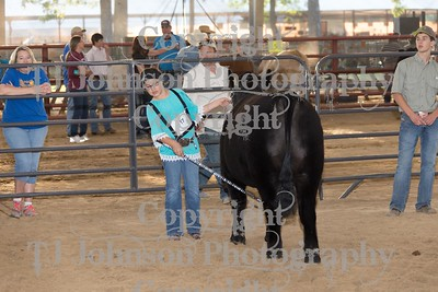 2015 CCYPS Commercial Steer Show