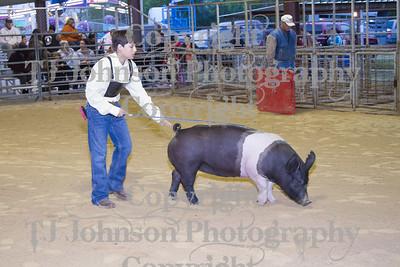 2013 Channelview FFA Breeding Swine