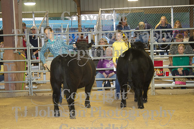 2013 Channelview FFA Open Steer Show