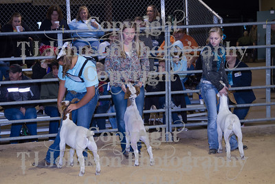 2013 Channelview FFA Open Goat Show