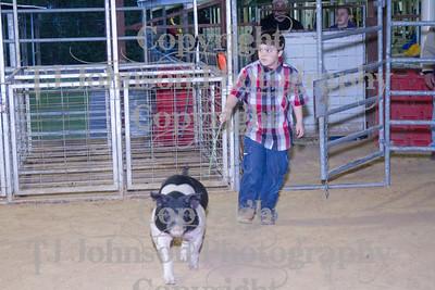 2013 Channelview FFA Open Swine