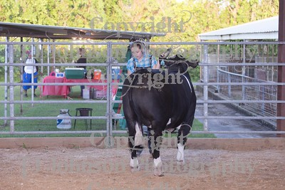2017 Channelview FFA Market Steer Show
