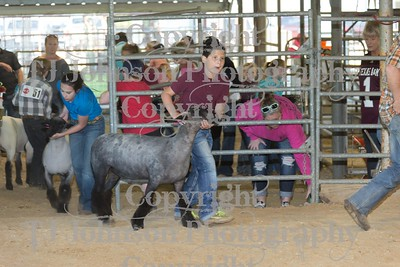 2017 Channelview FFA Open Lamb