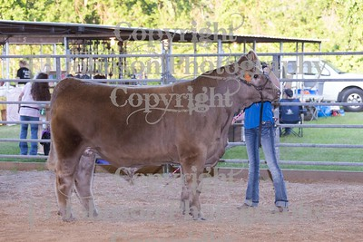 2017 Channelview FFA Open Steer Show
