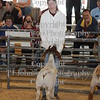 2009 HCF Goat Show Class 2 : All photos are color corrected before shipping.  This process allows you to change the cropping of your photos.