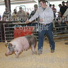 2009 HCF Swine Show Class 6 : All photos are color corrected before shipping.  This process allows you to change the cropping of your photos.