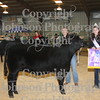 2009 Scramble Heifer - Exotic : All photos are color corrected before shipping.  This process allows you to change the cropping of your photos.