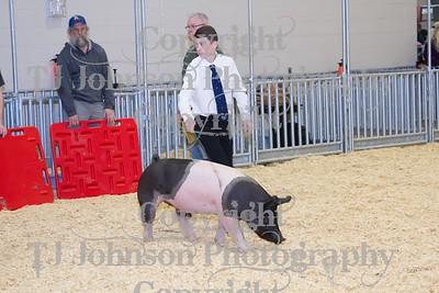 2014 KISD Livestock Show Swine Class 2