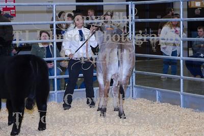 2014 KISD Livestock Show Heifer