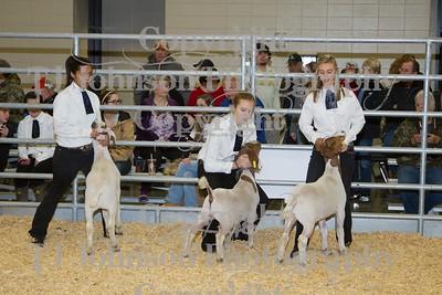 2014 KISD Livestock Show Goats Class 2