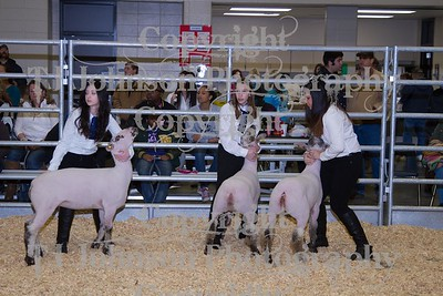 2014 KISD Livestock Show Lamb Class 2