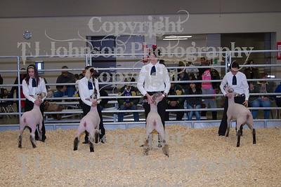 2014 KISD Livestock Show Lamb Class 1