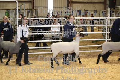 2009 Spring Branch Lamb Show