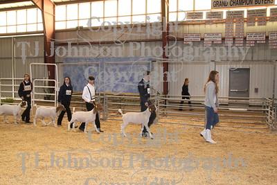 2011 Spring Branch FFA Goat 1