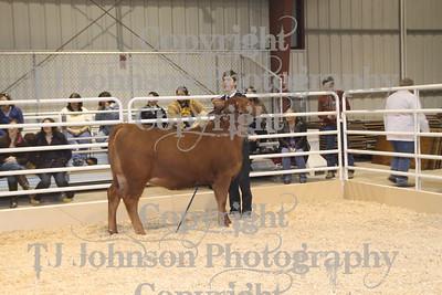 2011 Spring Branch FFA Heifers