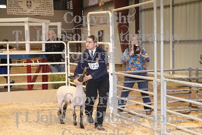 2011 Spring Branch FFA Lamb 1