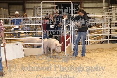 2011 Spring Branch FFA Swine 1