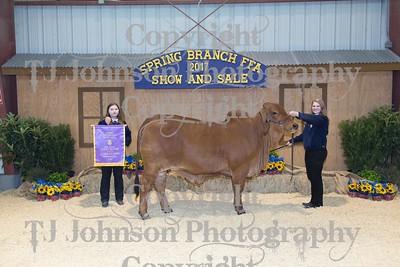 2017 Spring Branch FFA Livestock Show