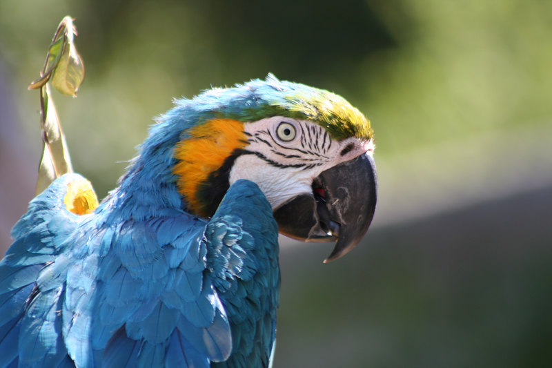 Have you seen my pirate<br /> Parrot - Oakland Zoo