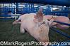 Pig <br /> County Fair - San Mateo California