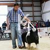 2013 Farmhouse - 5th Overall Gilt