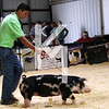 2013 Block & Bridle - 5th Overall Gilt