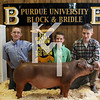 2013 Block & Bridle - 5th Overall Barrow