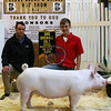 3rd Overall Gilt 2014 Purdue Block & Bridle