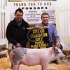 Grand Gilt 2014 Purdue Block & Bridle