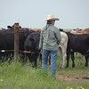 Rancher Deborah Clark watches over cattle on the Birdwell Clark Ranch in Texas.