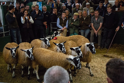 Hawes Gimmer Lamb Sale 2018
