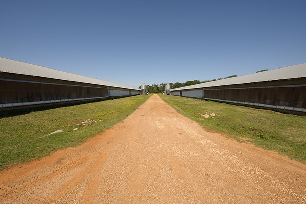 Poultry houses.