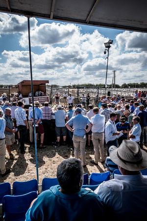 Thame Sheep Fair 2018
