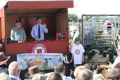 Thame Sheep Fair