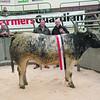 The champion, a British Blue cross heifer from Edmund Jackson  of Rosemount, Cumbria sold for £1,700. (L-R) Judge James Crichton and Edmund Jackson.