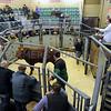 Paul Gentry selling young bulls. Photographer: Adrian Legge.