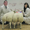 Aberdeen Christmas Classic 13 Overall Sheep Champions from Calum and Vivienne Angus, West Mey Farm, Mey by Thurso.